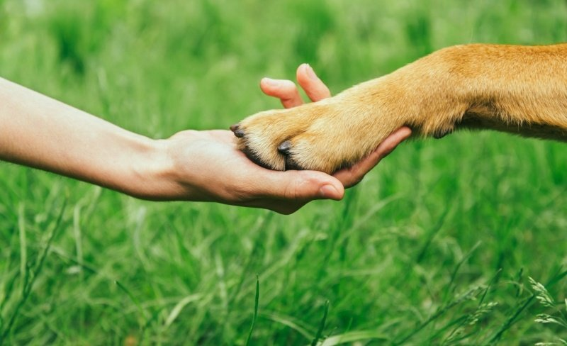 Difference between emotional support animals and service animals